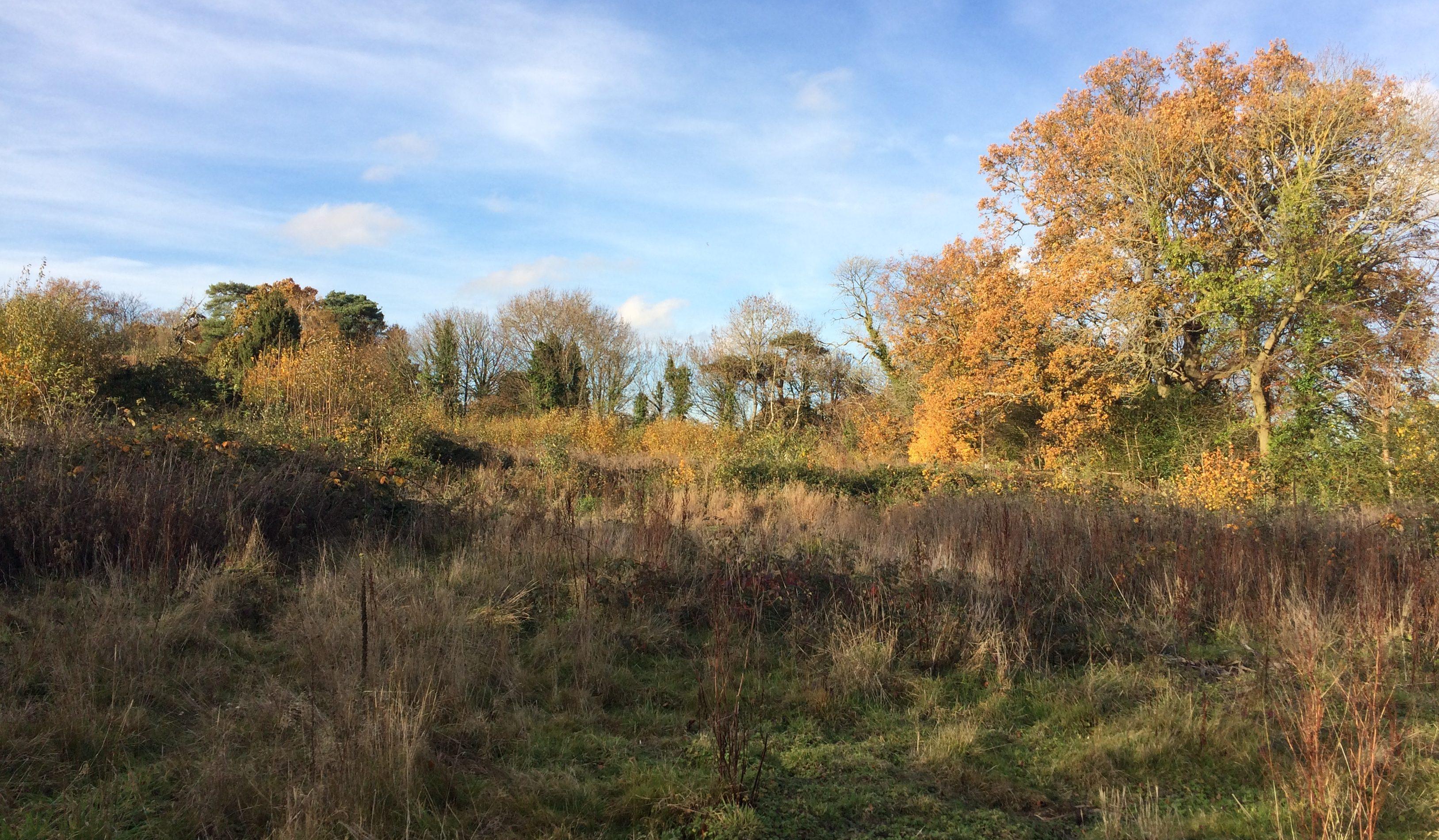 image of scrub land near hurst green