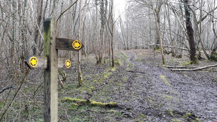 image of public footpath sign in woods