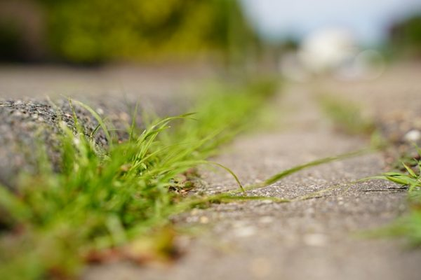 picture of a roadside curb